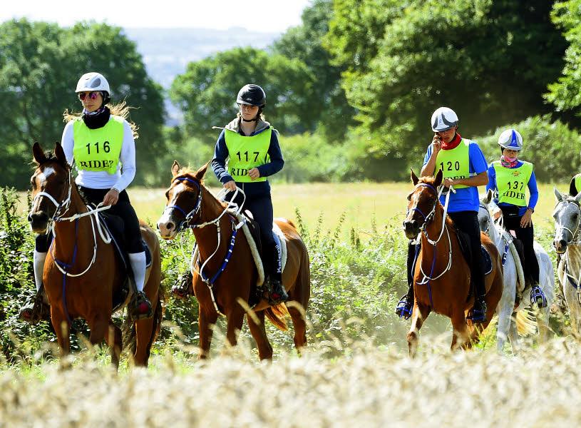 Calendrier Endurance Equestre 2022 Endurance – Comité Régional d'Equitation Sud